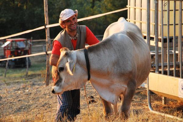 Protezione e cura delle mucche